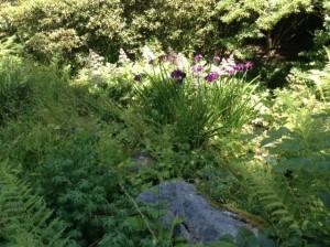 UBC Garden1